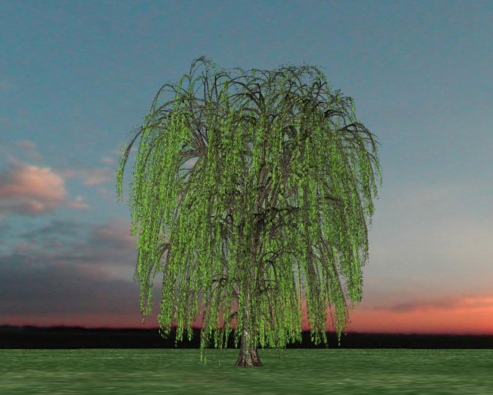 weeping willow Willow Tree (by Sofia Dorsey)